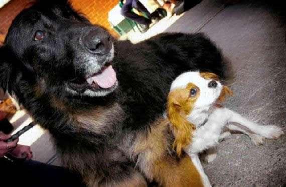 noticias Pruebas de que los animales tienen sentimientos